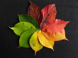 autumn-leaves-1486075_960_720